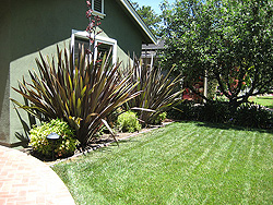 palo alto landscaping